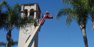 Bee Removal San Pedro CA Difficult bee removal using a 