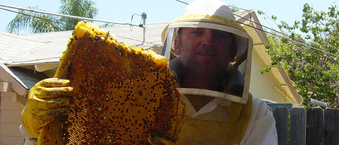 San Pedro Bee Removal Guys Tech Michael