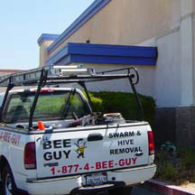 Lakewood Bee Removal Guys Service Truck